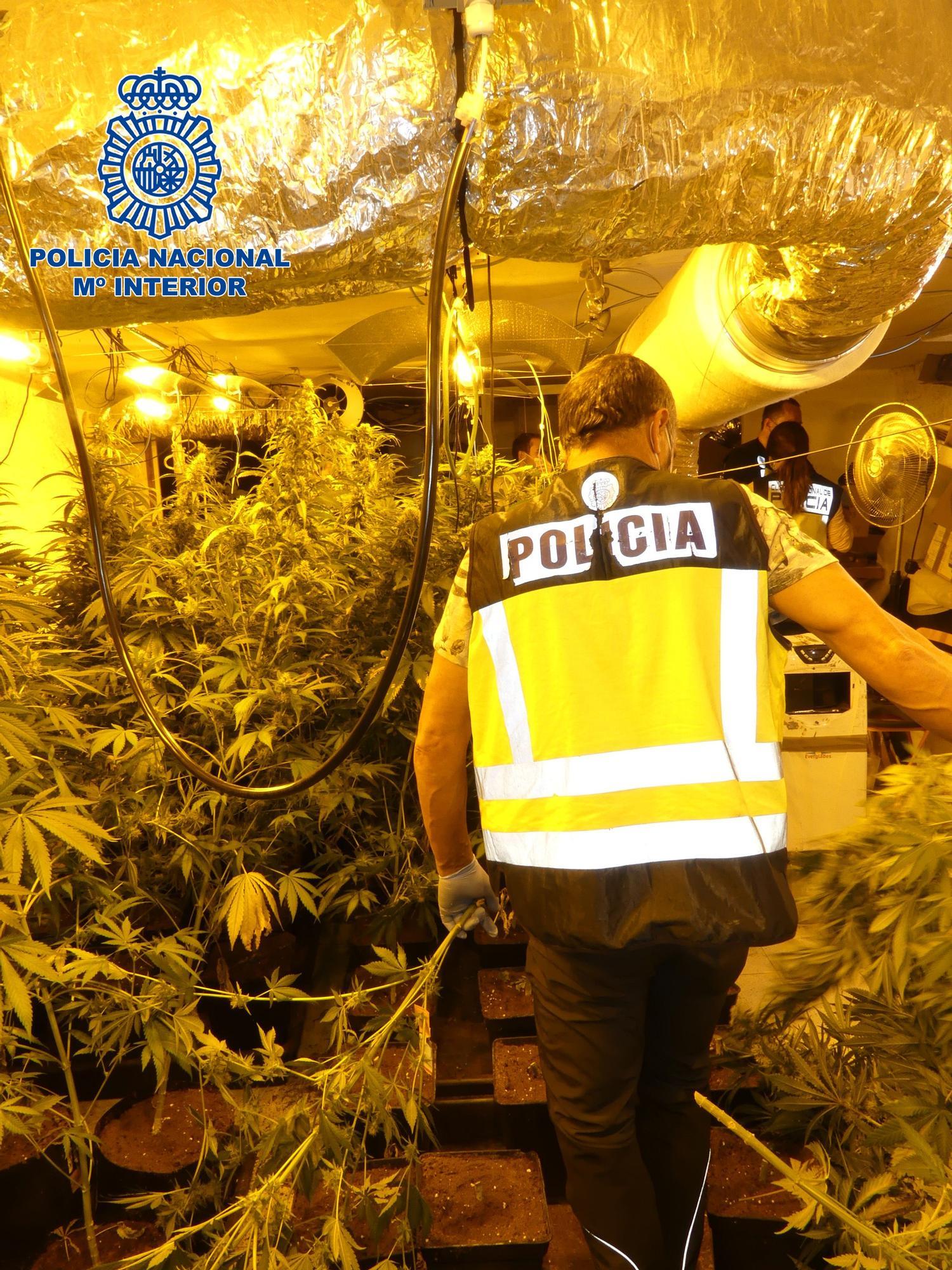 Localitzen una plantació de Marihuana a Lloret de Mar
