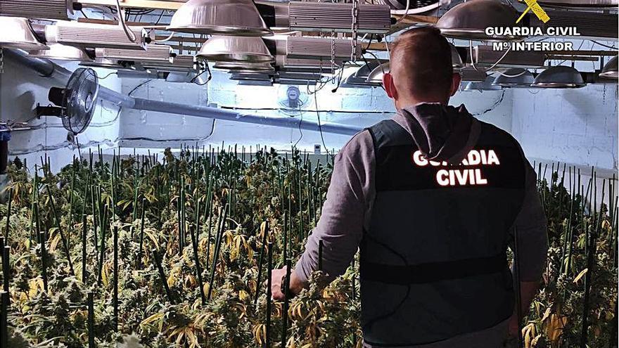 Un restaurante de Teulada ocultaba una plantación de marihuana en el sótano