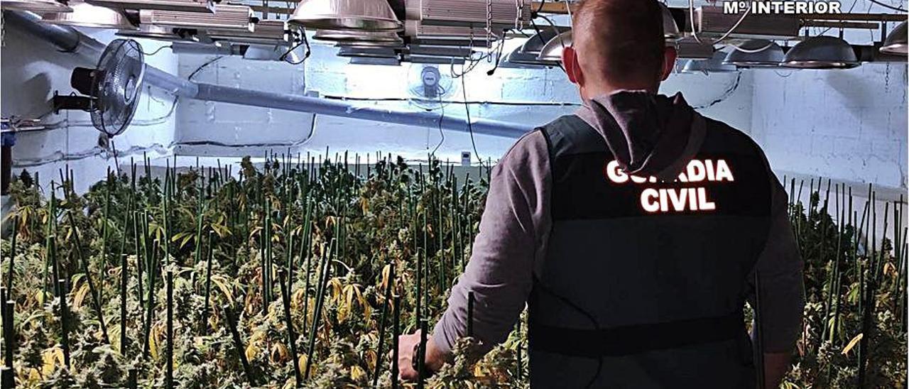 Una de las tres plantaciones incautadas en Teulada. | INFORMACIÓN