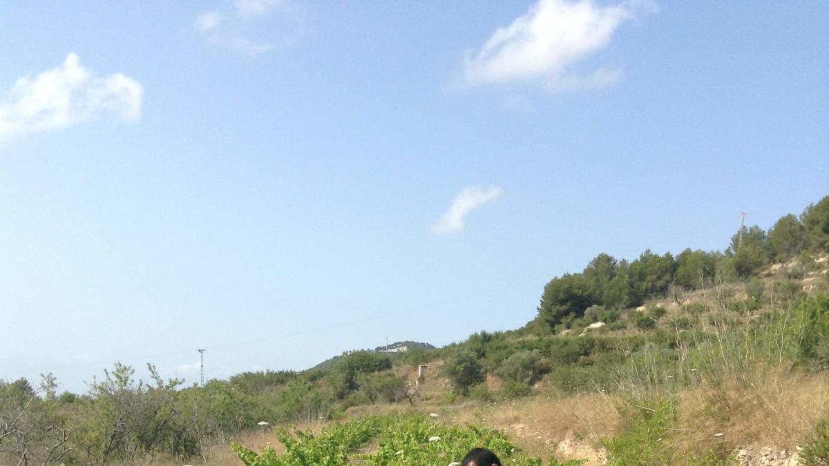 La bodega Joan de la Casa se beneficia del microclima propio de la comarca de la Marina Alta.