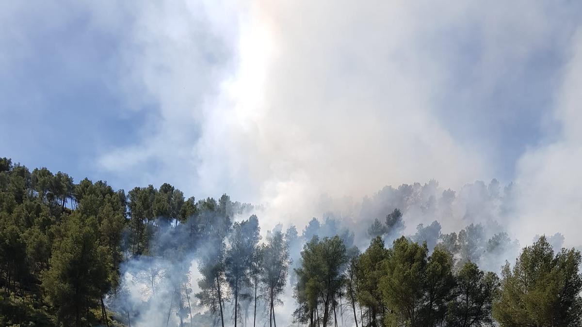 Incendio forestal en el Camino de Bermeja, en la localidad cordobesa de Palenciana.