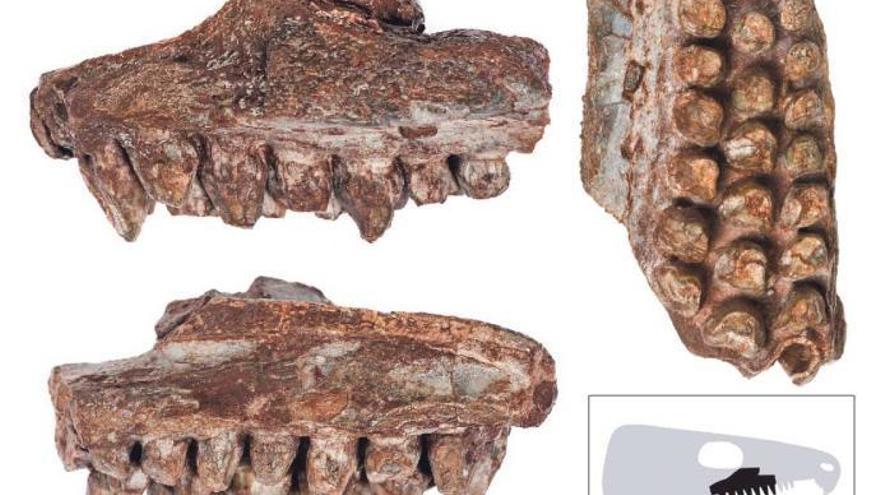 Deutsche Urlauberin findet auf Mallorca 260 Millionen Jahre altes Fossil