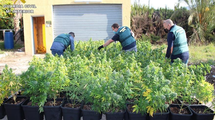 La Guardia Civil incauta mil plantas de marihuana en una casa de campo de Novelda