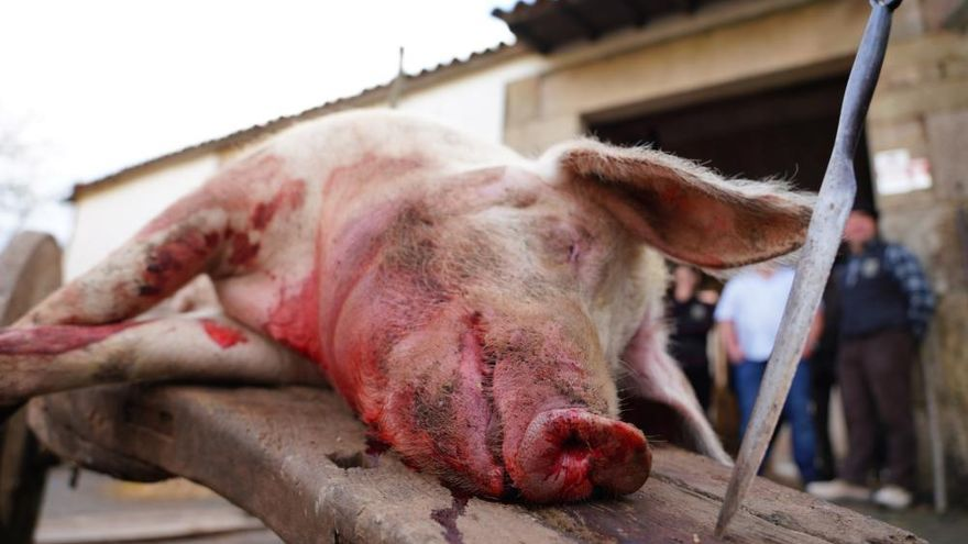 Donsión celebra por todo lo alto su Matanza Tradicional do Porco