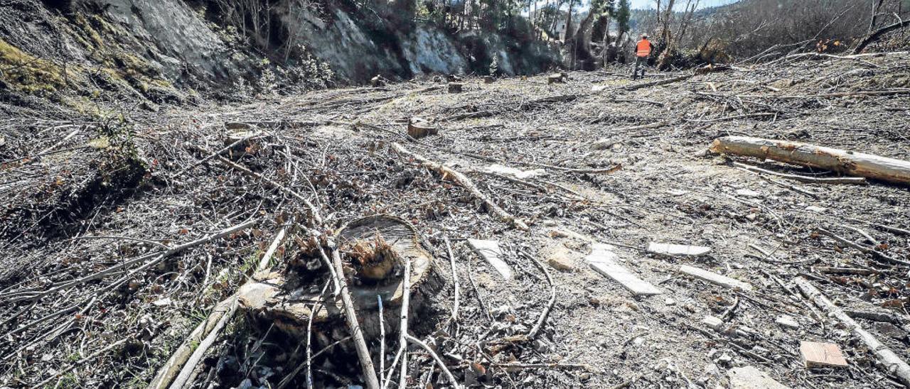 Imagen desoladora de la ribera del río Frainos a su paso por Benilloba, lugar en el que se ha llevado a cabo una tala masiva de árboles.