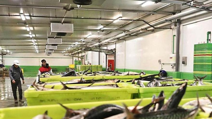 La flota pierde de pescar dos de cada cinco kilos de xarda por lo profundos que se hallan los bancos