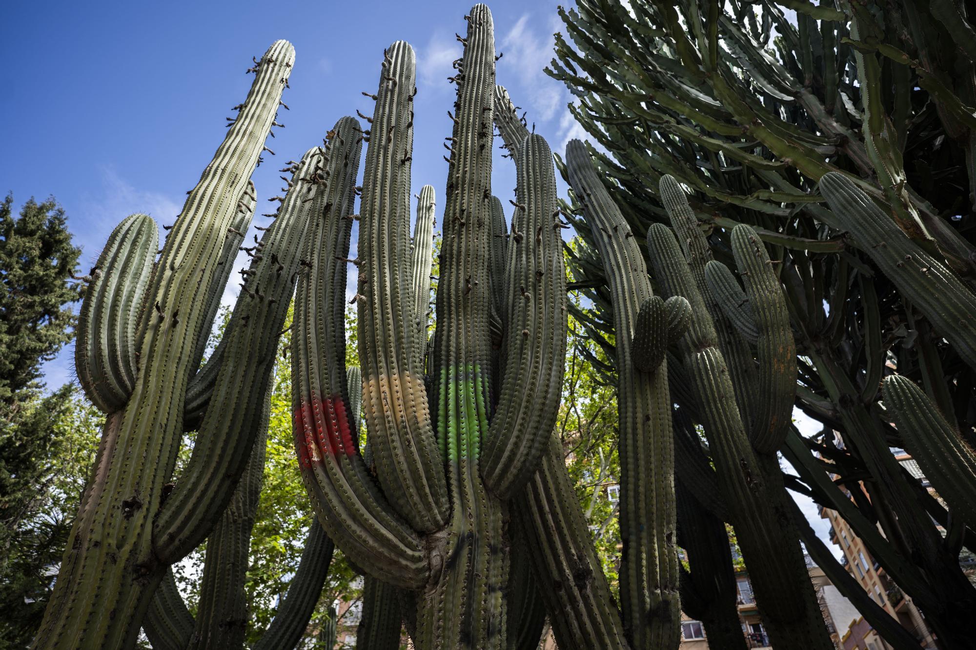 ¿Conoces los jardines de cactus de València?