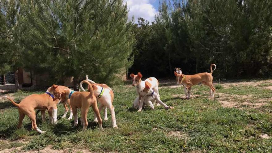 Una millonaria paga un centro para perros en Ibiza que los envía a Suiza en jet