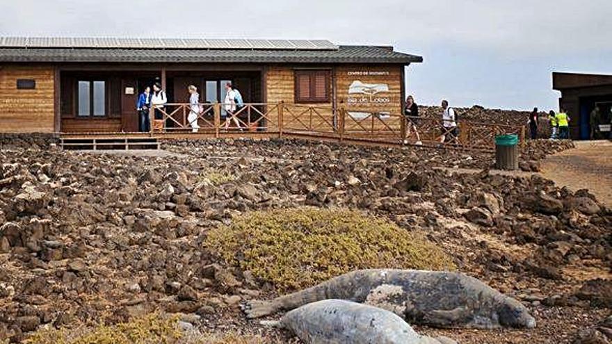 Una empresa de Murcia se hace con la gestión de la Isla de Lobos por tres años