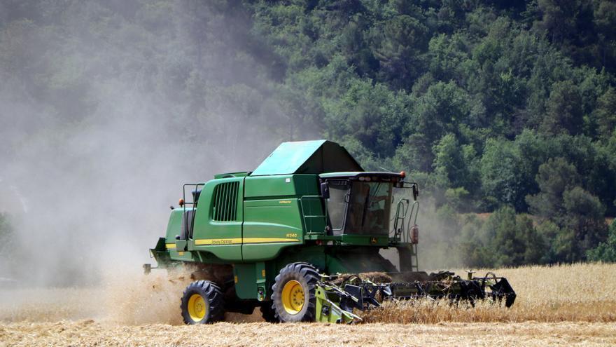 El Bages i l'Anoia registren la pitjor campanya del cereal dels darrers 10 anys per culpa de la sequera