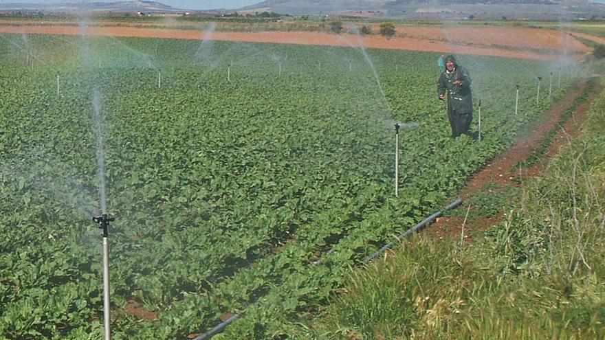 """El canal Toro-Zamora pide mayor """"flexibilidad"""" para realizar riegos"""