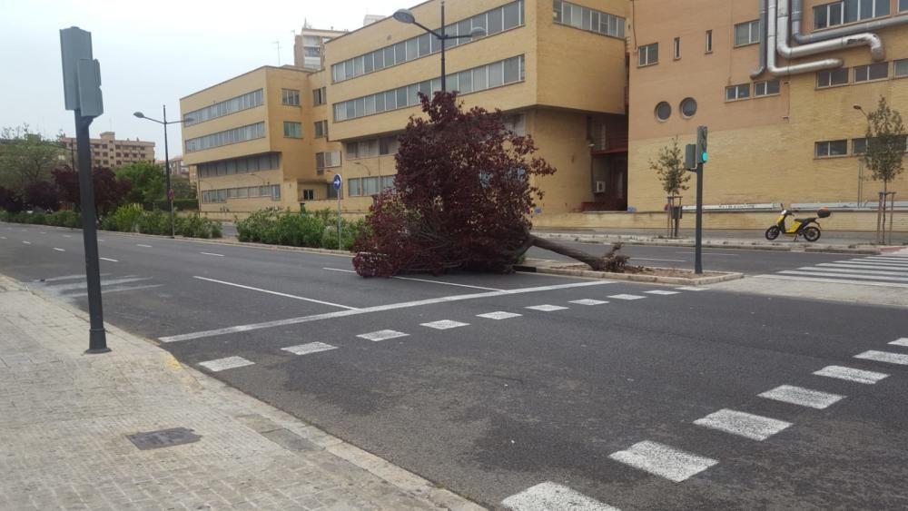 Un árbol caído en la calle Joaquín Ballester en València.