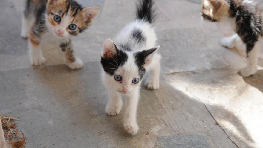 Llançà demana material i aliments per tenir cura dels gats desfavorits