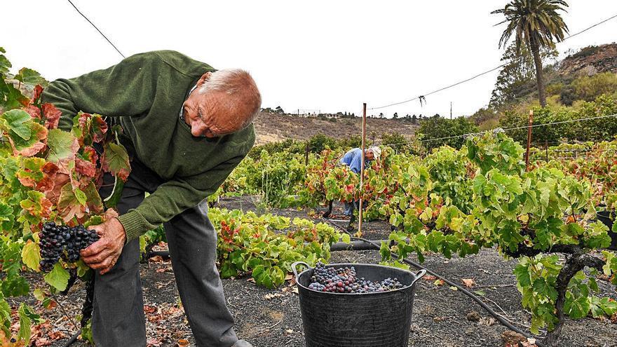 Biden acaba con el proteccionismo de Trump y da oxígeno al vino canario