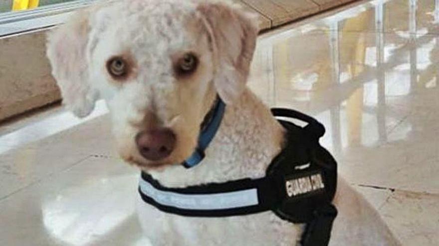 Perros adiestrados buscan rastros de las niñas de Tenerife en casa de su padre