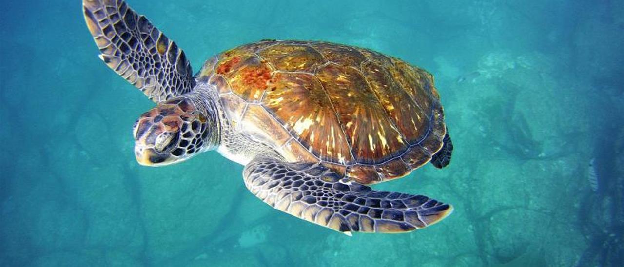 El océano de Canarias 'capea' el aumento de temperaturas
