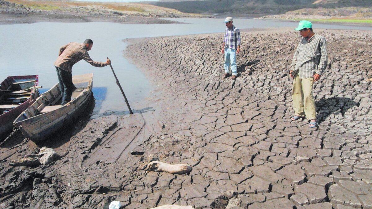 El planeta debe restaurar en nueve años un área como China para sobrevivir