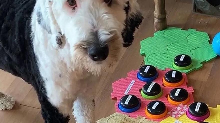 Esta es la perra que 'habla' y triunfa en TikTok