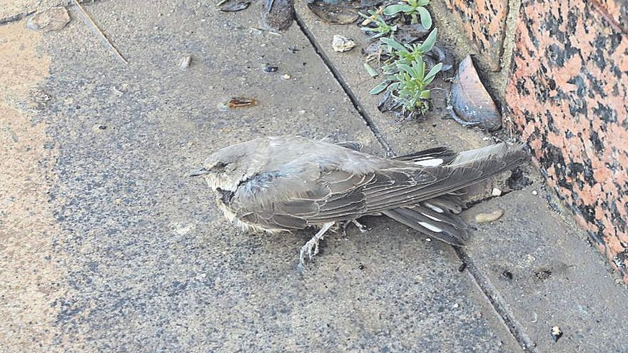 Ecologistas denuncian la muerte a tiros de 15 aves protegidas en Santa Pola