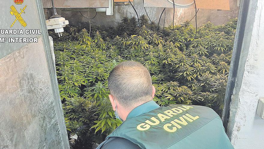 Apresado por cultivar y vender marihuana en Sueca y Alberic