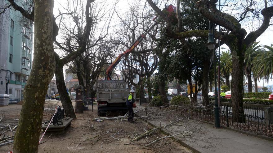 Uno de cada tres árboles de A Calzada serán sustituidos