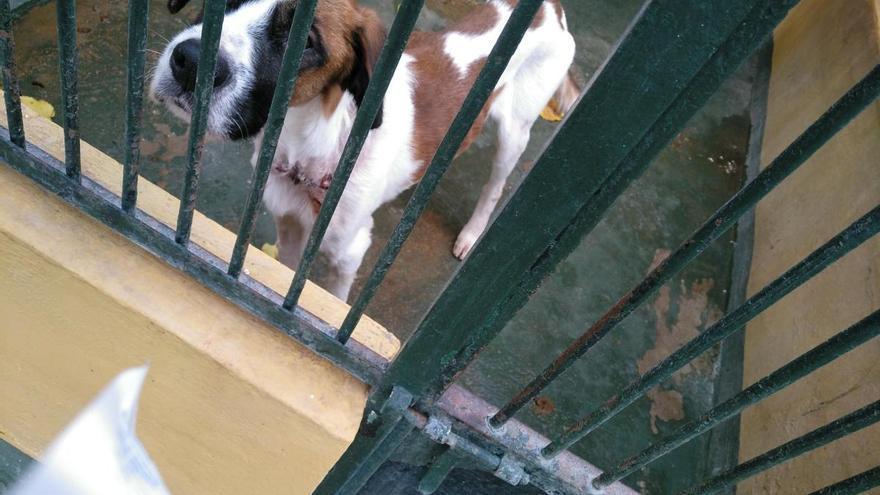 Los abandonos de perros se reducen a la mitad en Son Reus en julio