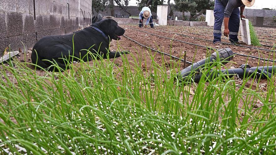 El Cabildo ofrece ayudas para las pequeñas explotaciones agrarias