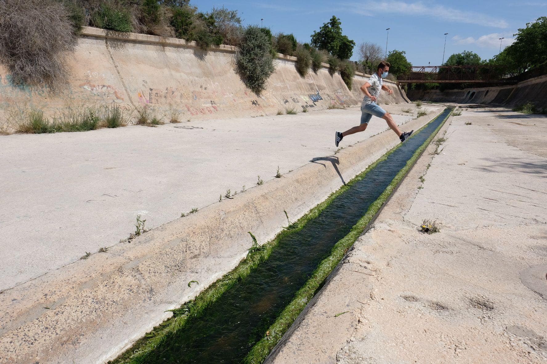 Así es el alga verde asociada a los vertidos fecales que inunda el Vinalopó