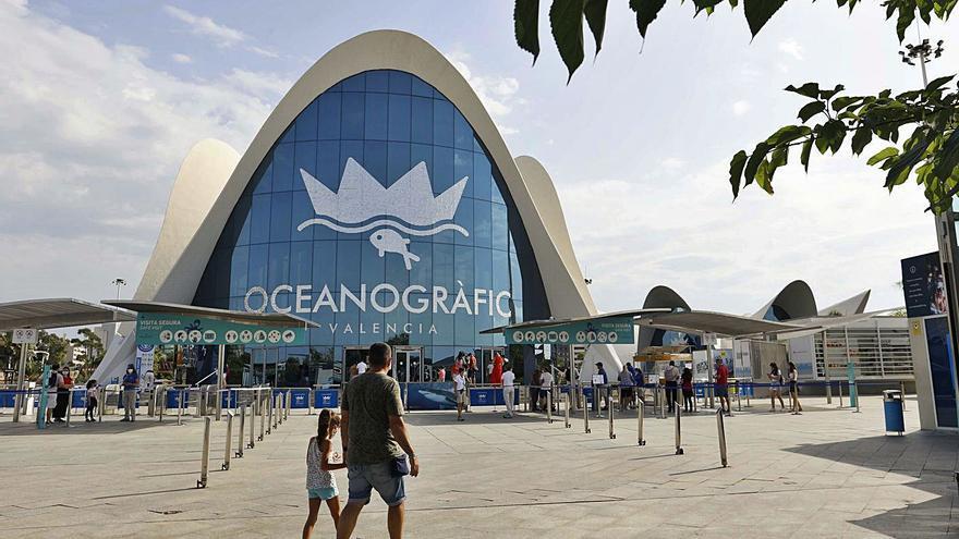 Global Omnium inyecta        9 millones al Oceanogràfic tras la caída de ingresos
