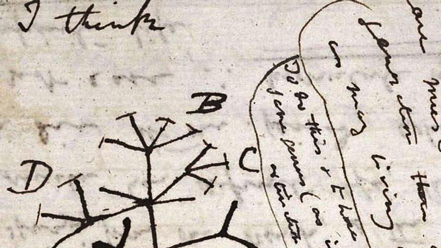 Cambridge busca ahora dos cuadernos de Darwin desaparecidos hace 20 años