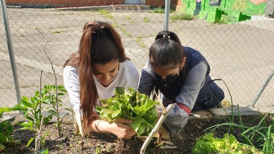 El proyecto 'Sueña tu patio' en el IES María Moliner
