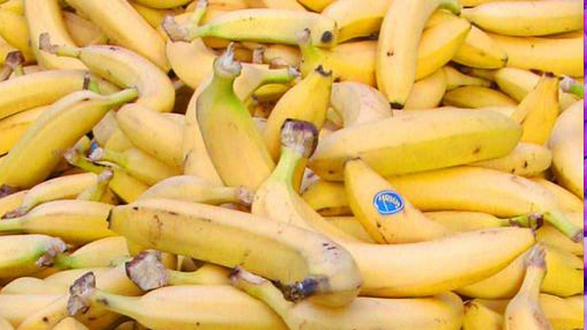 Plátanos de Canarias en una imagen de archivo.