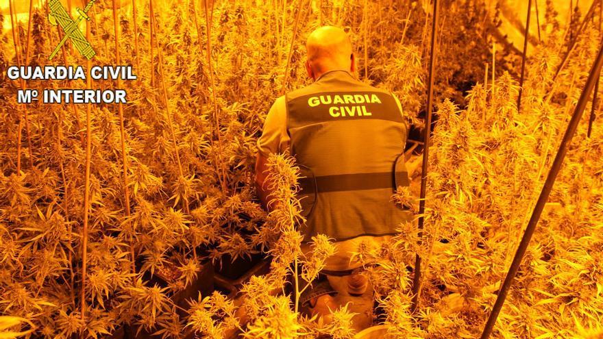 Desmantelan un invernadero con casi 200 plantas de marihuana en Llaurí