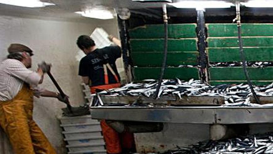 Pescadores que pararon por el covid en 2020 lamentan ahora tener menos cupo de xarda