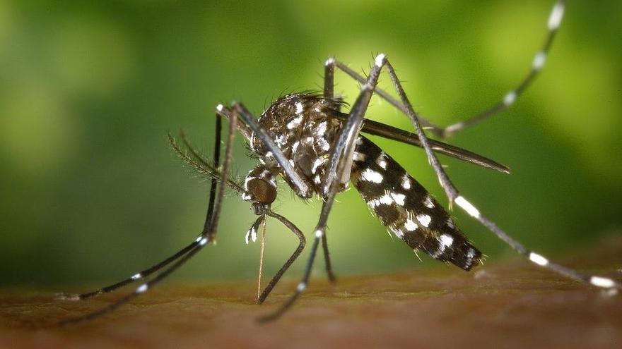 ¿Los mosquitos no te dejan dormir? Apunta estos 'tips'
