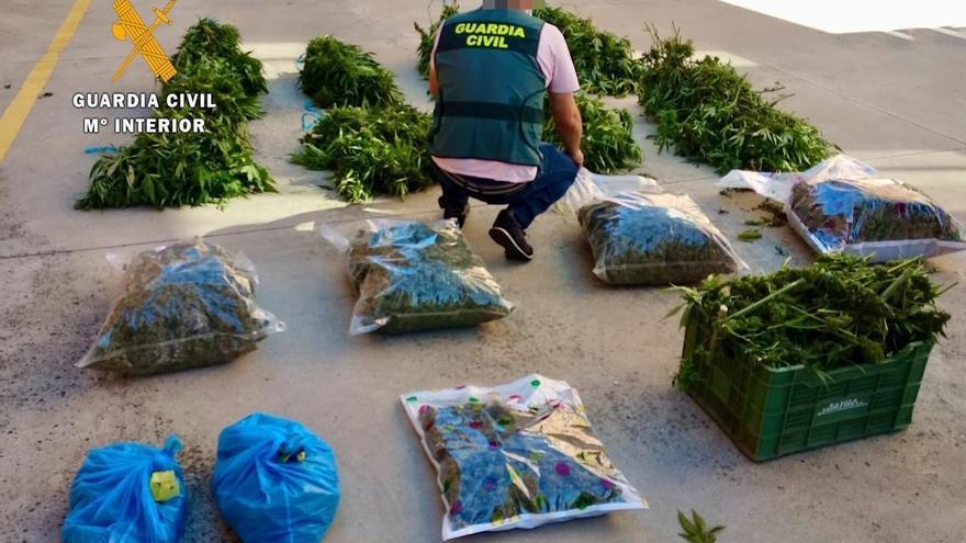 Siete detenidos en tres municipios de la provincia por cultivar marihuana