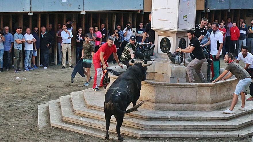 Segorbe tendrá concurso de ganaderías en las fiestas