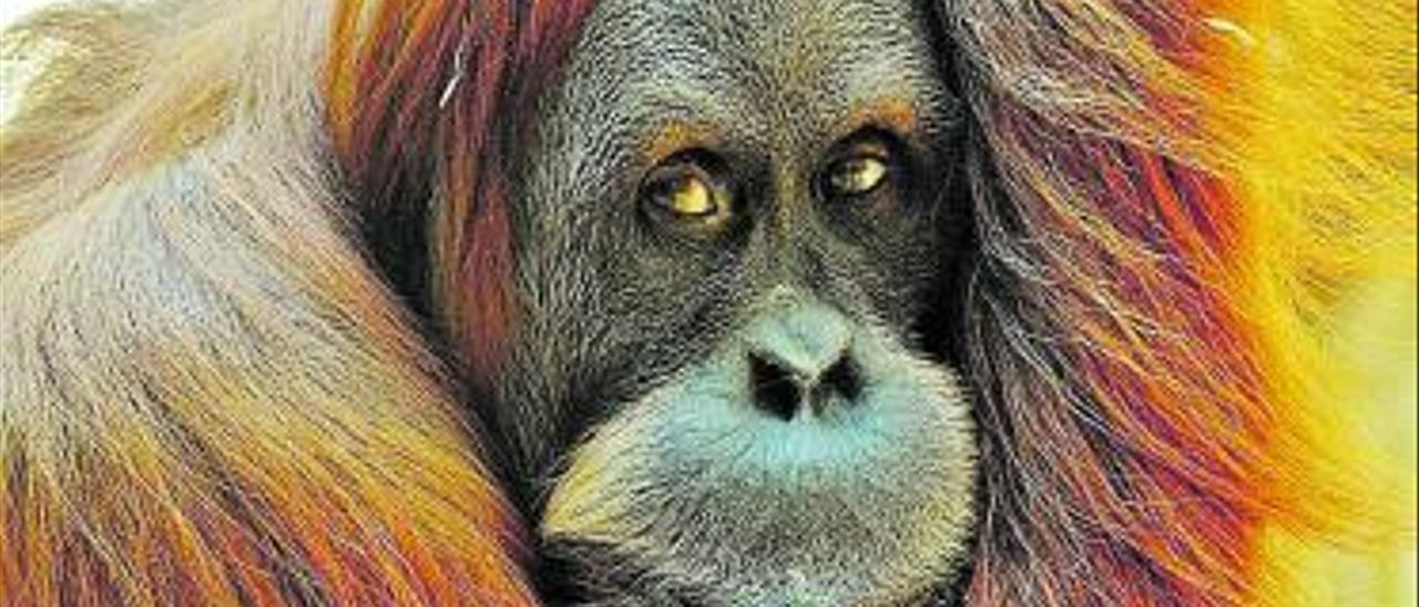 El primer animal vacunado en el mundo contra el covid se llama Karen.