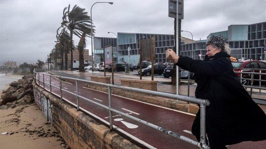 Fallece una mujer al caerle encima una palmera por el viento en Palma de Mallorca