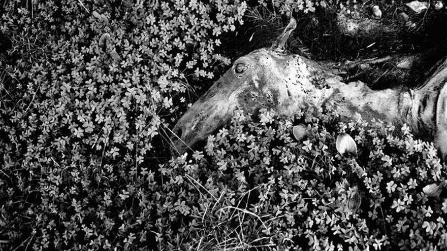 """Ein """"Stern""""-Fotograf erkundet das mallorquinische Niemandsland"""
