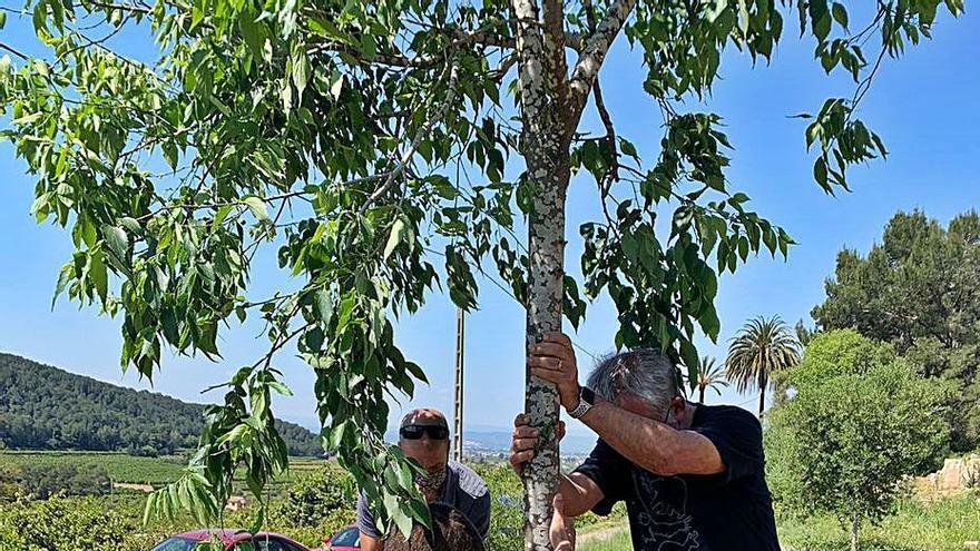 El laboratorio forestal cataloga los insectos del valle de La Casella