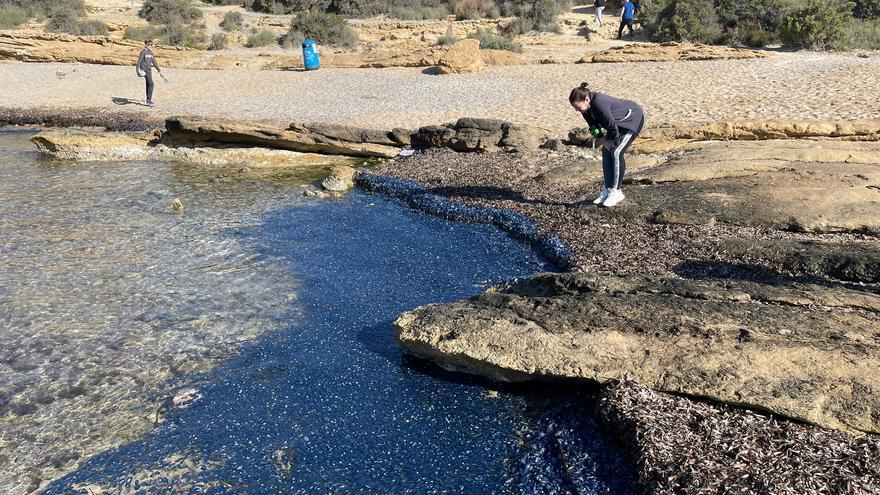 Invasión de medusas velero en la Cala Cantalar de Alicante