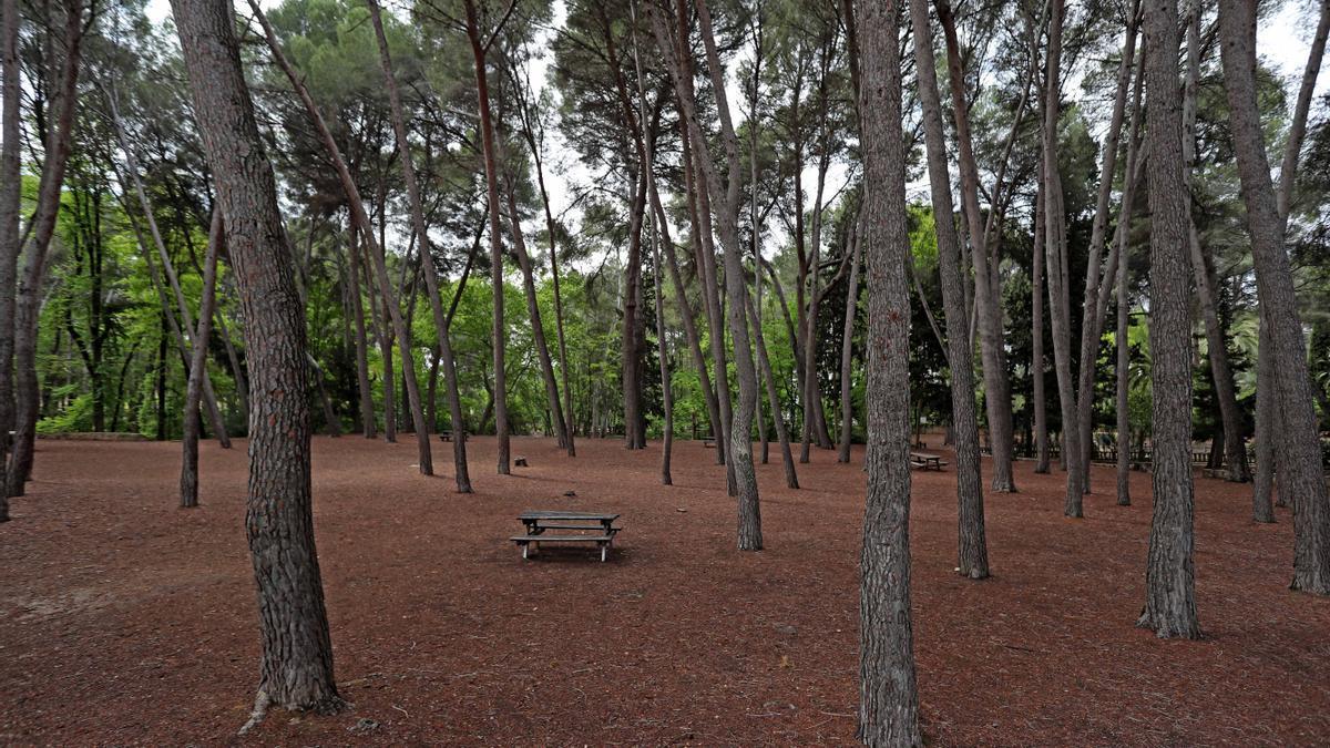 Zona forestal en el Parc Sant Vicent de Llíria