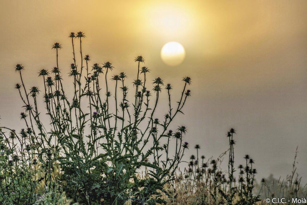Moianès. L'albada ja es pot veure. Comença a despertar l'astre més apreciat de tots: el Sol, que ja vol dir-nos bon dia a tothom i començar a escalfar com només ell sap.