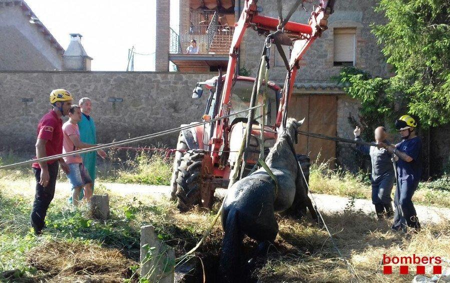 Rescat d'un cavall que havia caigut en una fossa sèptica a Avià
