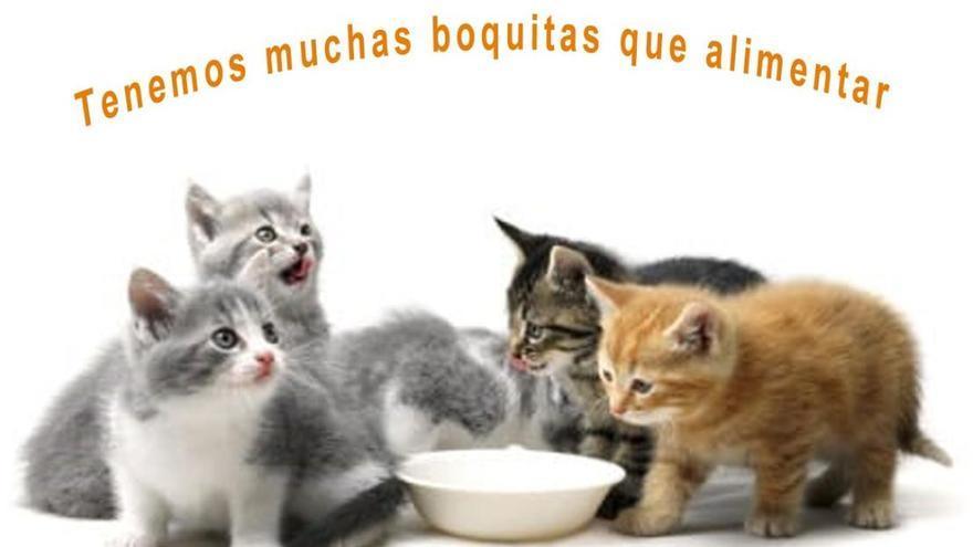 Campaña de recogida de alimentos para gatos.