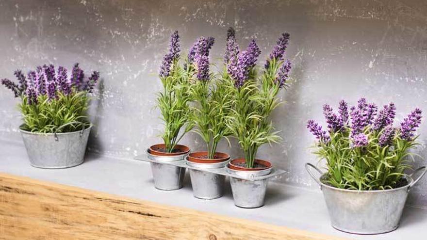 Cinco plantas que debes de tener en casa para ahuyentar a los mosquitos.