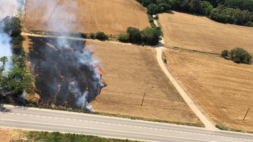 Un foc calcina 3.000 metres quadrats d'un camp de blat a Bàscara