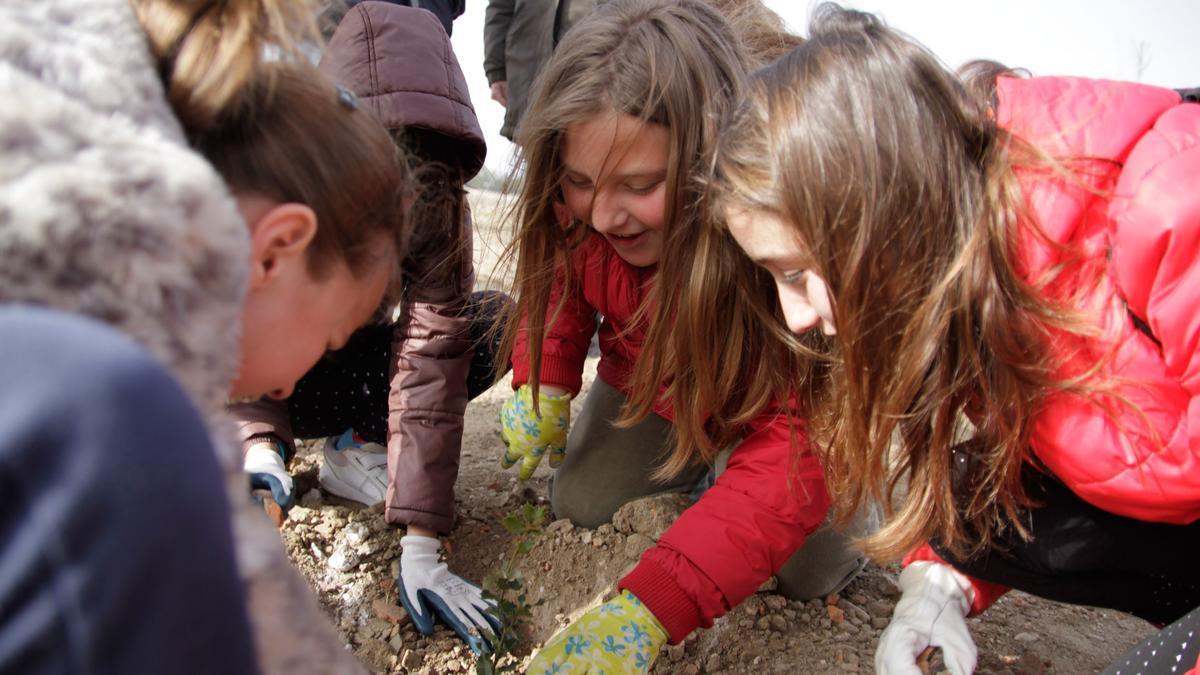Un grupo de niñas planta un esqueje de un árbol.