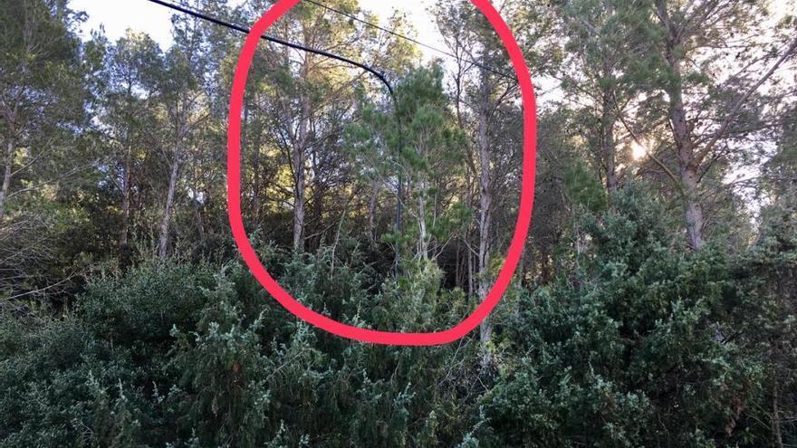 El municipi de Boadella i les Escaules torna a patir un robatori de cable telefònic